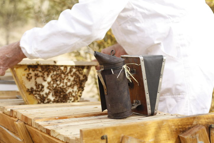 Australian Beekeeper tending his bee hives